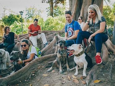 Recorrer Sevilla con perros educados