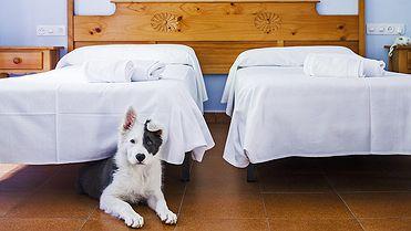 Hoteles que admiten perros grandes