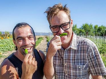 Los chiles cultivados en España