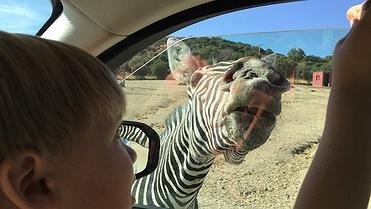De safari con tus niños sin salir de Madrid