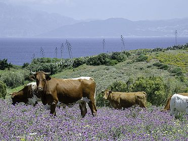 Tarifa (Cádiz): interior, parques naturales y restaurantes