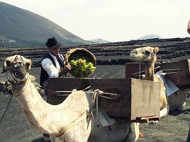 Vinos de Canarias y Baleares