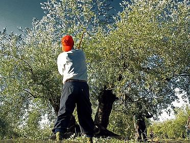 Oleoturismo en Jaén: las experiencias con el aceite de oliva virgen extra