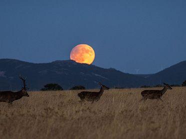 Berrea en el Parque Nacional de Cabañeros: el otoño de los ciervos