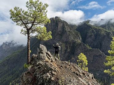 El Bosque de los Tilos (La Palma)
