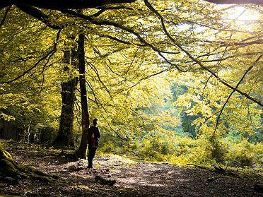 Bosques donde recolectar frutos de otoño