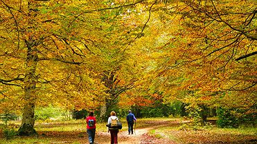 Bosques con encanto en España para ir en otoño