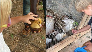 Can Musón (Ibiza): granja ecológica para niños