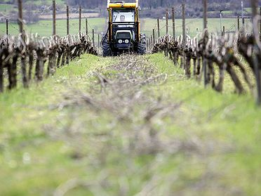 Txacoli, el vino blanco de Amurrio
