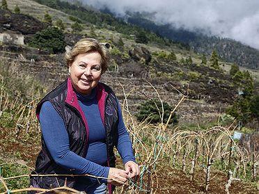 Vinos de Tenerife: Bodegas Ferrera (Güímar)