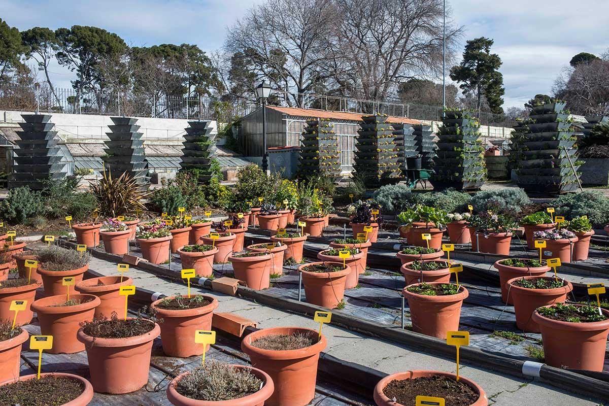 Decenas de jardineros y viveristas mantienen el Vivero de Estufas y su importante producción.