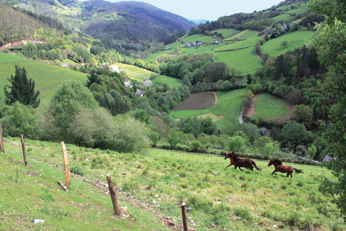Caballos en el valle de Taramundi.
