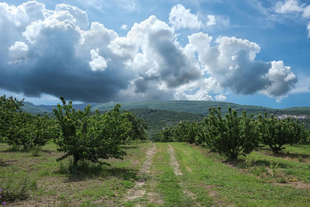El Valle del Jerte no sólo está espectacular con la floración, también con la cereza madura.