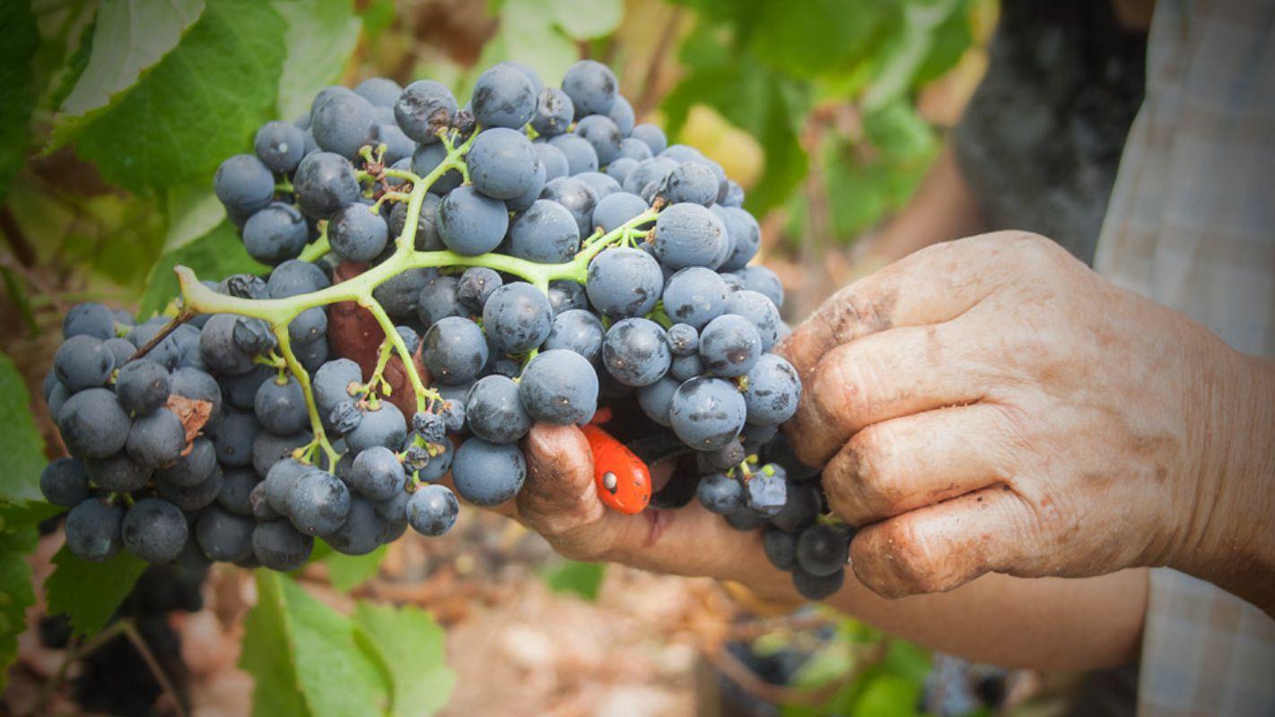 El vino canario se menciona en las obras de Shakespeare o en las de Ben Johnson.