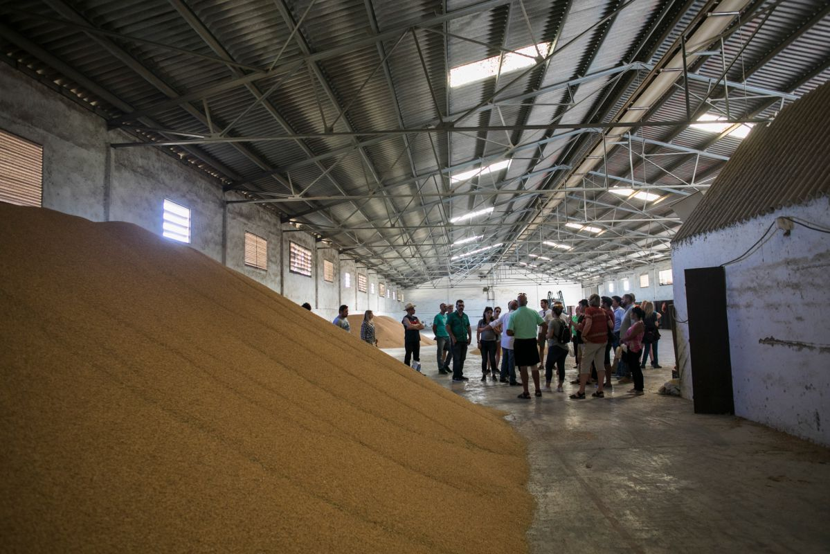 Los graneros de arroz, durante la visita a la finca.