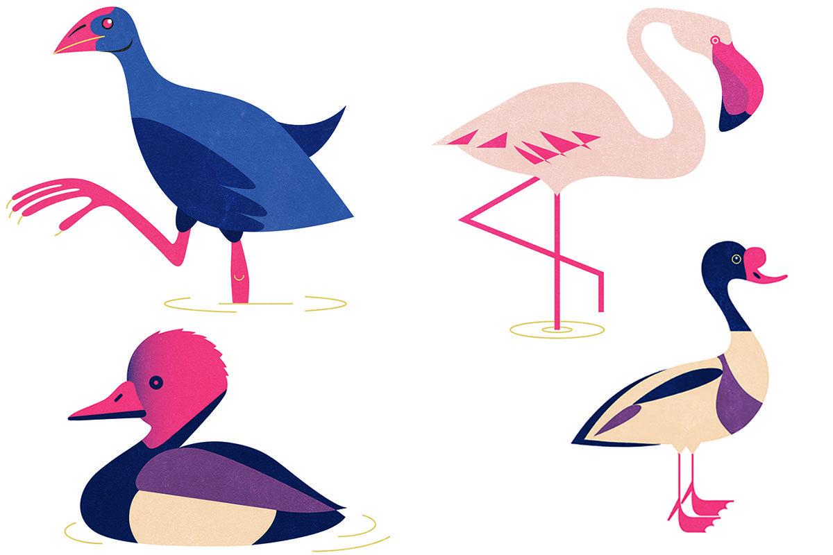 Calamón común, Flamenco común, Pato colorado y Tarro blanco (de izquierda a derecha y de arriba a abajo).