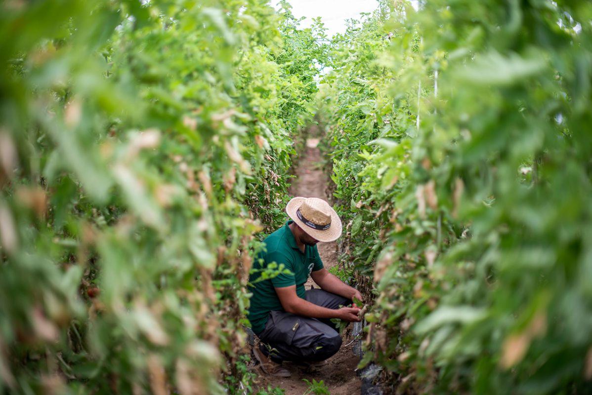 En esta finca se trabaja como los agricultores de toda la vida.