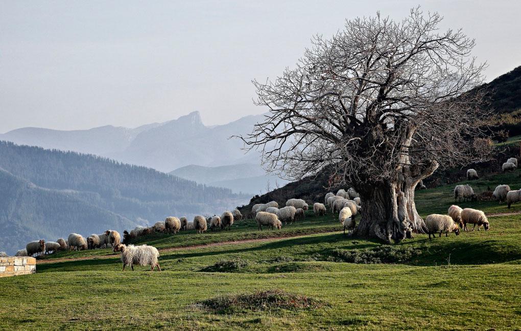 El Castañar, el paraíso de Pedro y su rebaño. Foto: Roberto Ranero.