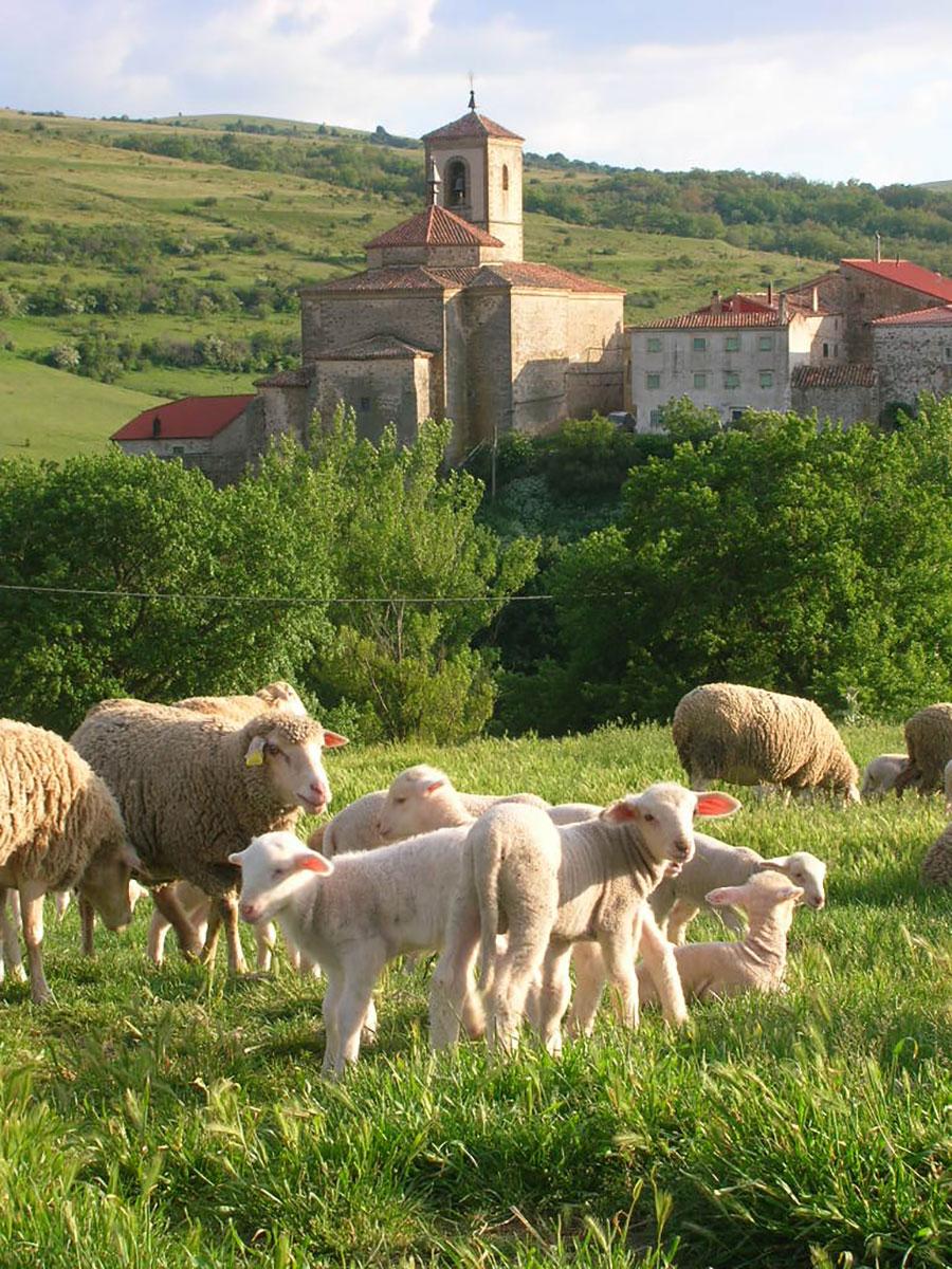 Las ovejas campan a sus anchas en el Museo de Pastores. Foto: Museo de Pastores.