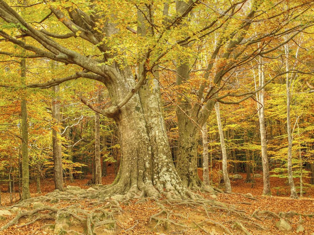 Parque natural más antiguo de Cataluña. Foto: Shutterstock
