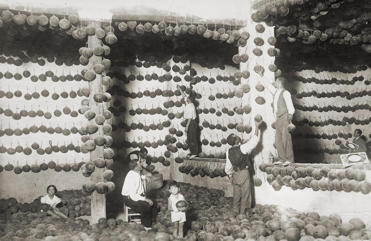 La familia Vidal en el melonar familiar, donde era tradición colgar las frutas en un lugar fresco y seco.