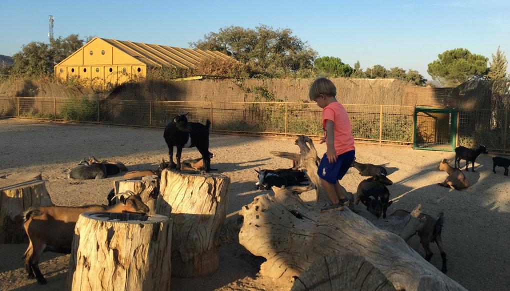 Los más pequeños pueden jugar entre cabras y cerdos vietnamitas.