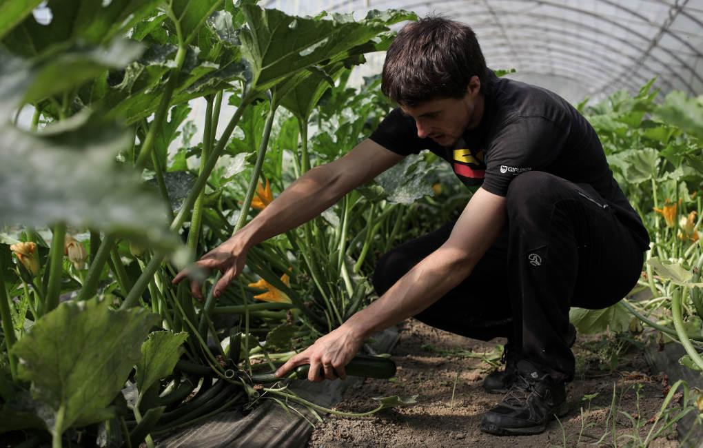 Más de una veintena de personas se encargan de que cada planta reciba sus cuidados.
