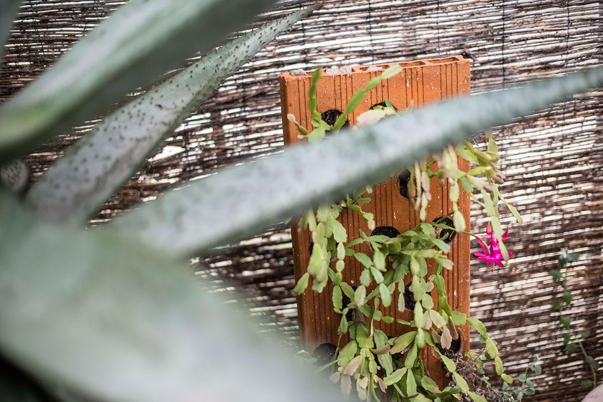 Los ingeniosos inventos de don Carlos Sala, el centenario viverista. De una ladrillo, un jardín colgante.