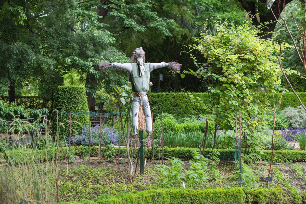 Un espantapájaros en la zona del huerto del Real Jardín Botánico de Madrid.
