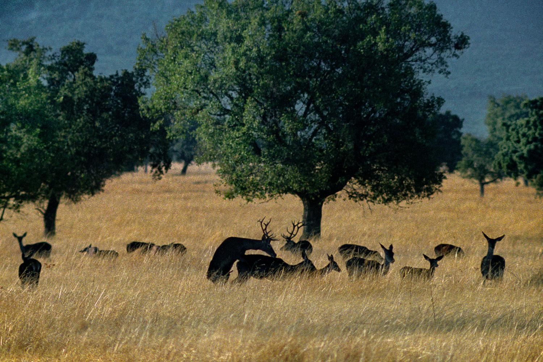 Varios ciervos en convivencia.