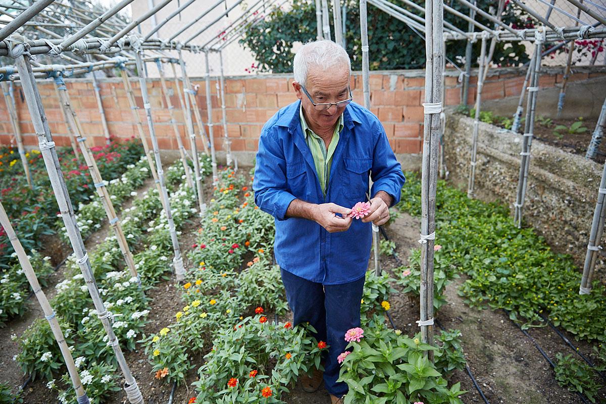 Este año, quieren plantar siete y ocho variedades nuevas.