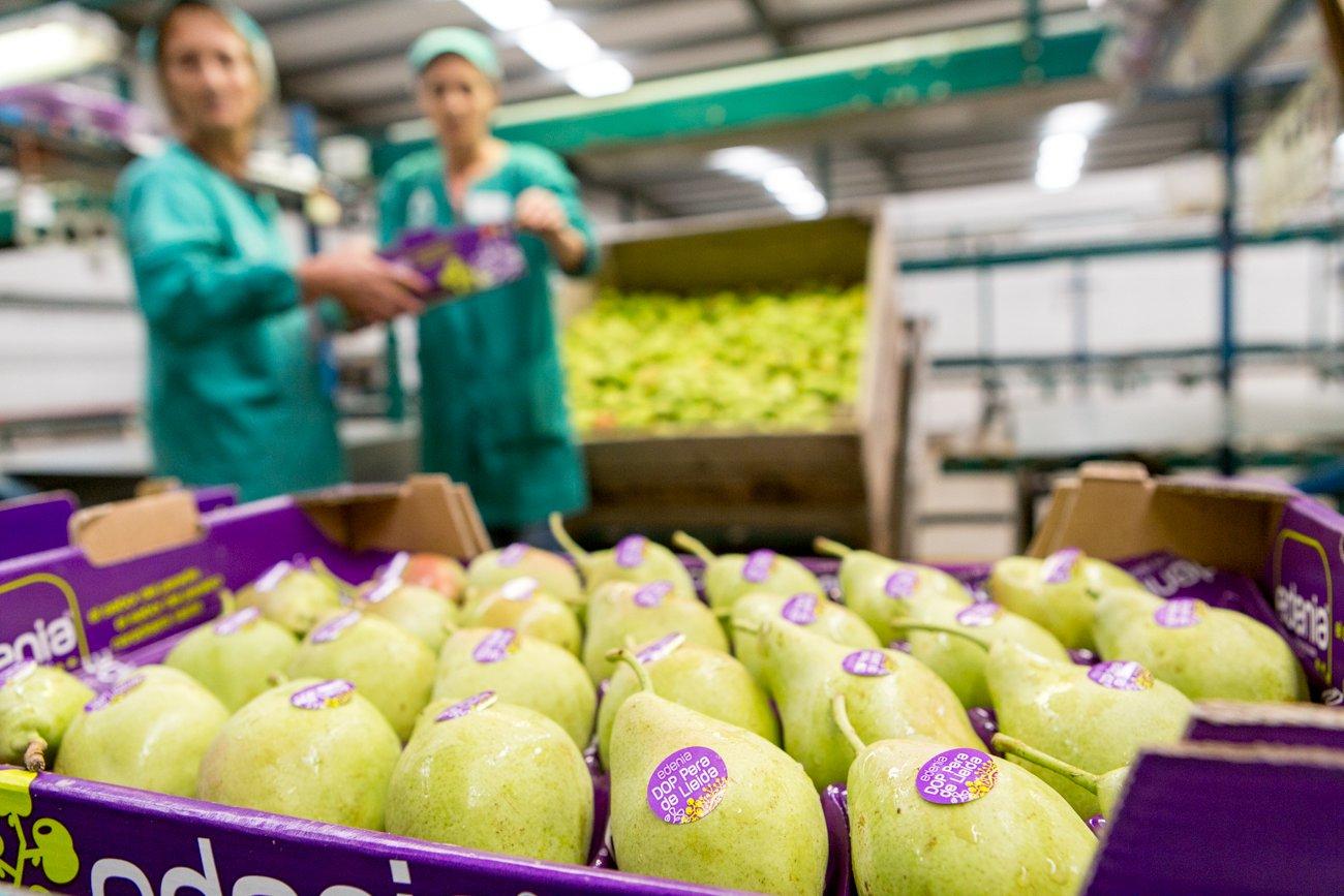 DOP Pera de Lleida: limonera empaquetada