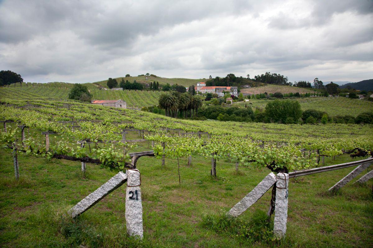 Viñedos cerca del Pazo Baión, en Vilanova de Arousa.