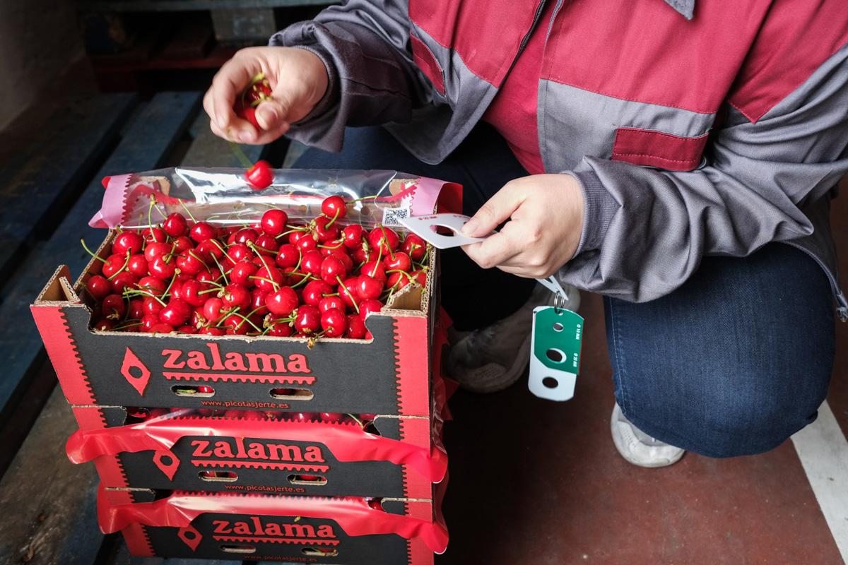 La controladora de calidad de la fruta controla que el tamaño es correcto.