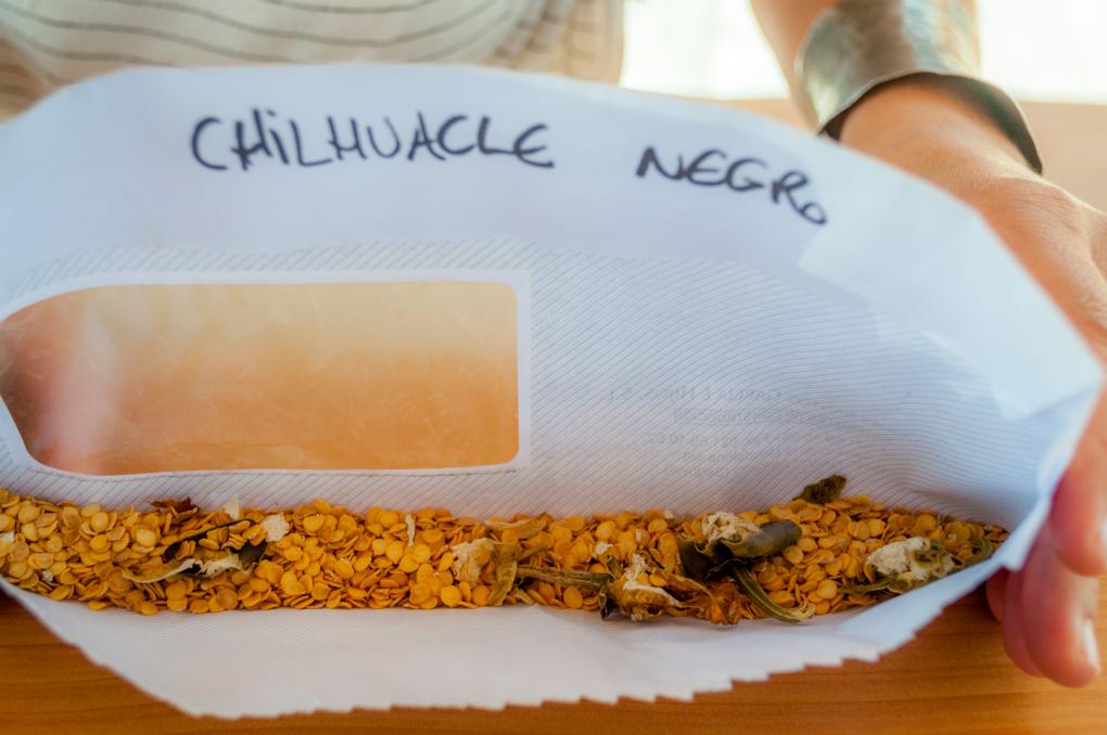 Para lograr las mejores plantas y frutos, tienen su propio banco de semillas. Foto: Beto Troconis.