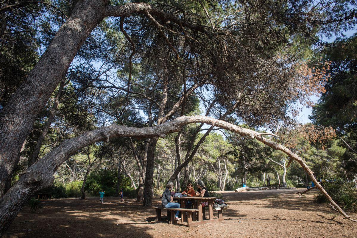 Un grupo reposa en una de las mesas de madera bajo la sombra de los árboles de La Dehesa de El Saler (Puerto Natural de La Albufera, Valencia).