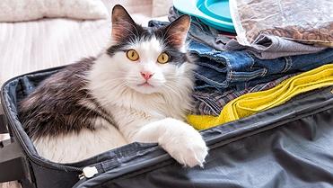 Consejos para viajar con gatos