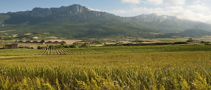 En esta zona de La Rioja los valles son de un verde intenso.