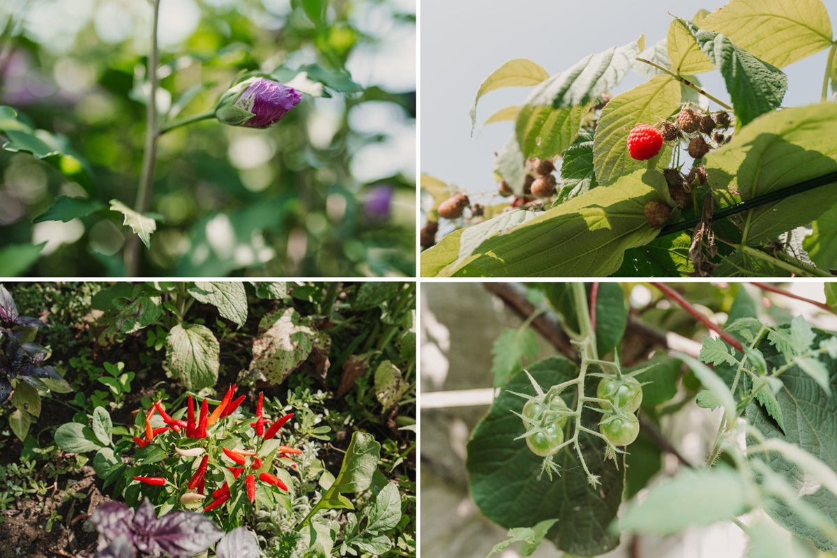 Adelina es incapaz de contar las variedades de vegetales que crecen en su huerta.