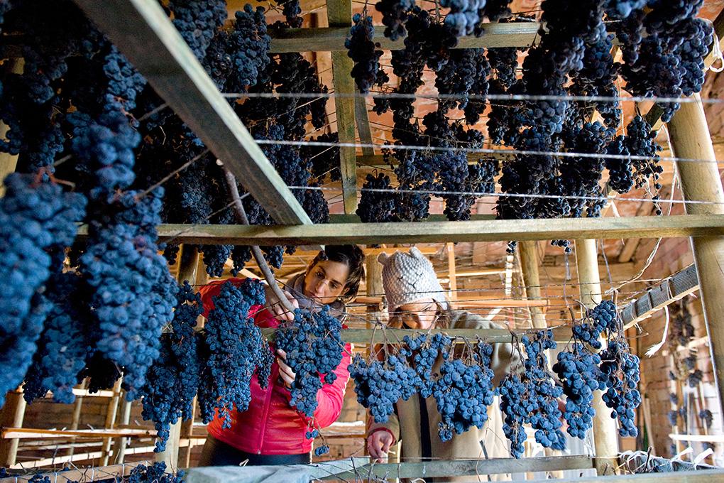 Leire e Irantxu montando la colgadera de uva tinta.