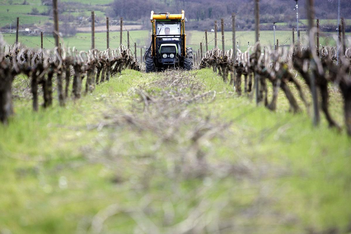 Cuidados en las viñas de Artomaña Txakolina. Foto: Arabako Txakolina.