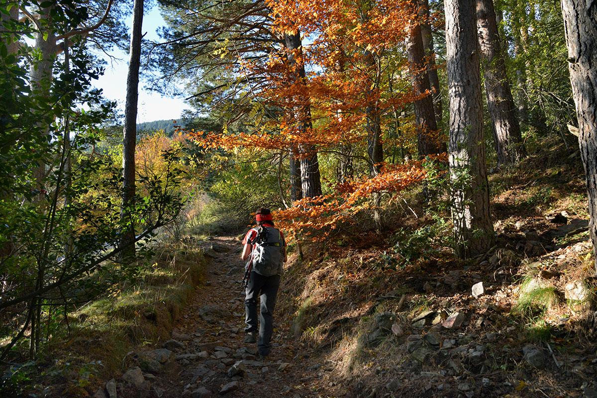 Trasmoz: Hayedos del Parque Natural Moncayo. Foto: Alfredo Merino | Marga Estebaranz