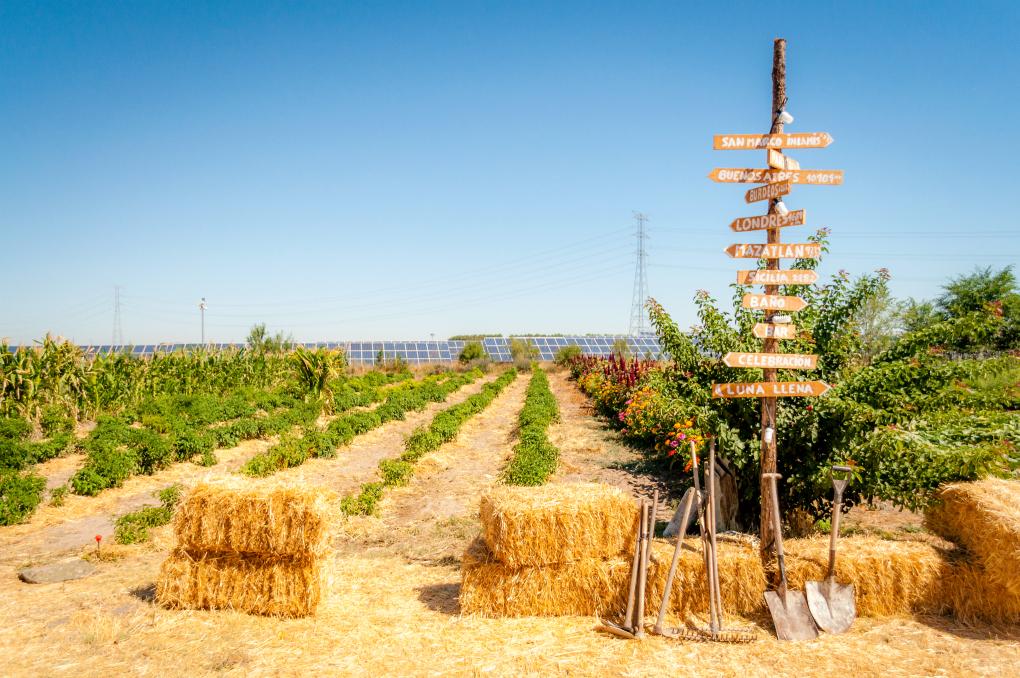 La Huerta de la Retamilla, cultivada con chiles para 'Punto MX'. Foto: Beto Troconis.