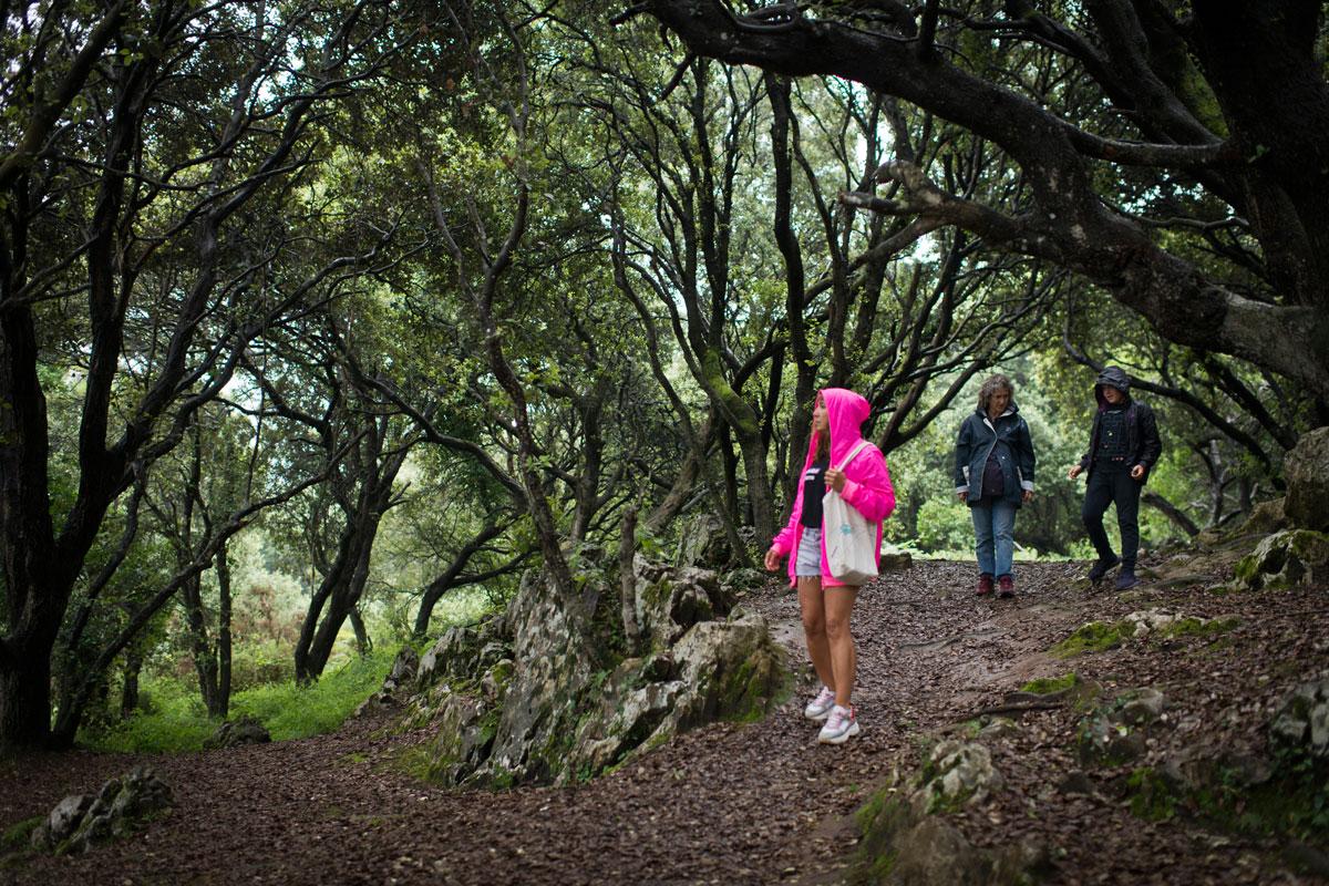 El bosque de encinas que rodea San Emeterio y Santa María de Tina. Foto: Sofía Moro.
