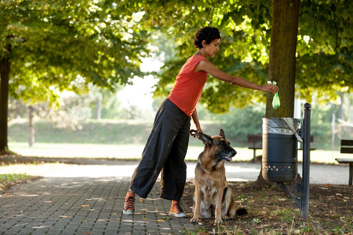 Perro paseando por el parque