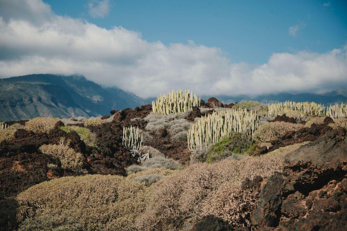 El paisaje de cardones y tabaibas es espectacular.