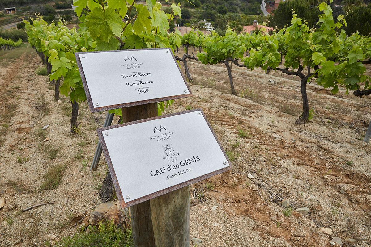 Viñedos donde se produce la uva para elaborar Cau d'en Genis, el vino hecho en exclusividad para el restaurante 'Solc'.