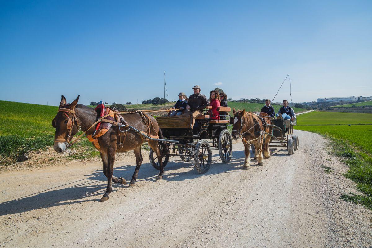 Los carros tirados por una mula y un caballo percherón, a la cola de la cabalgata.