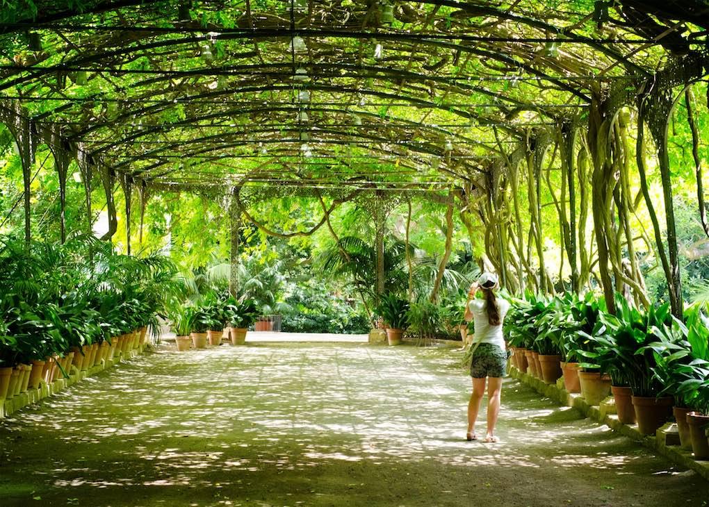 La Concepción Jardín Botánico Histórico de Málaga, pulmón verde. Foto: Shutterstock.