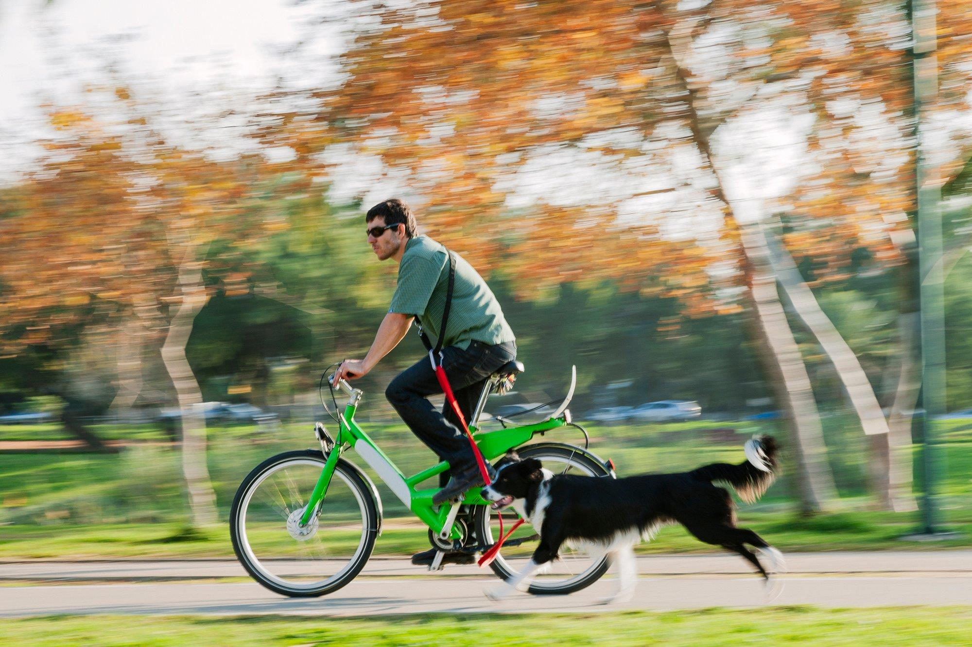 Un plan sostenible y divertido con mascotas. Foto: Shutterstock